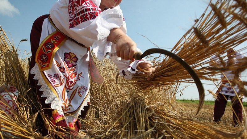 В старые времена сбор урожая старались завершить до наступления Бабьего лета