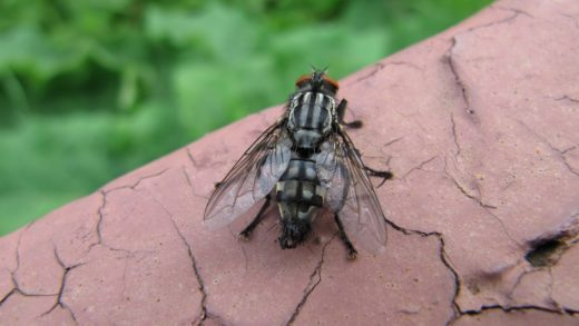 Как быстро избавиться от мух в домашних условиях навсегда